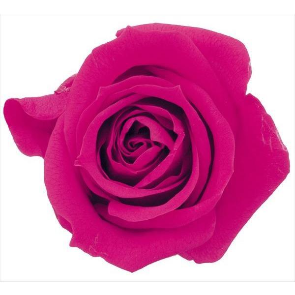 いずみ 内祝い ローズ フランボワーズ 小分け 1輪 バラ 花材 プリザーブドフラワー 大地農園 直営ストア