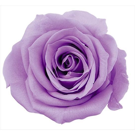 プリザーブドフラワー花材 いずみ ローズ 激安超特価 スウィートライラック 小分け 1輪入 タイムセール 大地農園