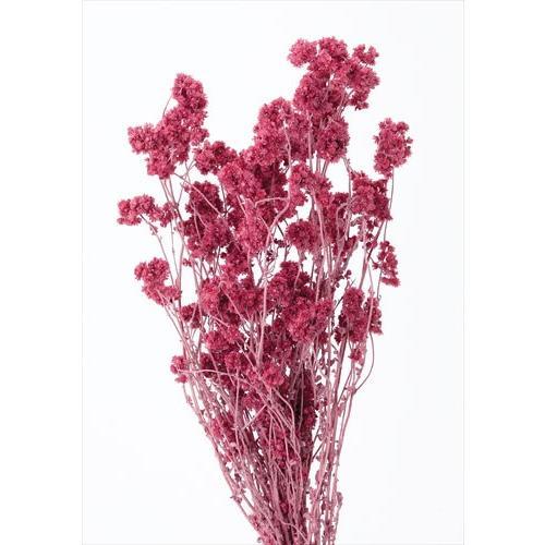 人気 ドライフラワー 花材 クリスパム フランボワーズ 小分け ハンドメイド 在庫処分 ワークショップ 赤 手作り