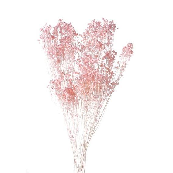 ドライフラワー 商店 花材 モリソニア 大地農園 小分け 発売モデル ピンク