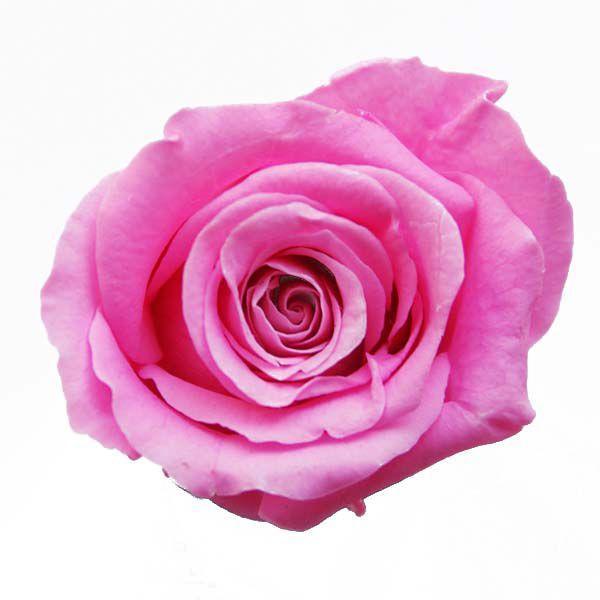 ベベ 情熱セール ローズ ピンク 小分け 花材 1輪入 国際ブランド プリザーブドフラワー