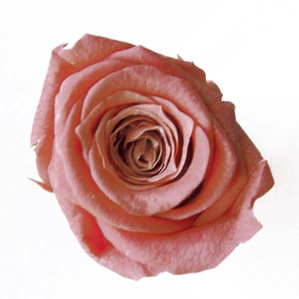 至上 ベベ ローズ コーラルピンク 超人気 専門店 小分け プリザーブドフラワー 1輪入 花材