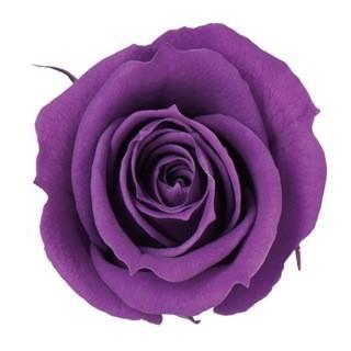 プリザーブドフラワー 材料 新品 送料無料 花材 ベベ 返品送料無料 グレープ ローズ 1輪入 小分け