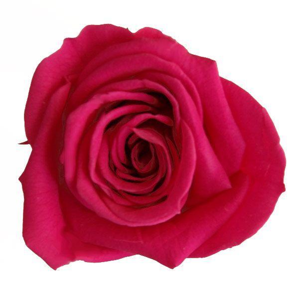 新品 ニーナローズ カシスベリー 小分け 1輪入 材料 プリザーブドフラワー 希少 花材