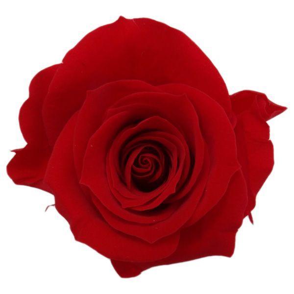 期間限定で特別価格 アイネスローズ レッド 小分け 1輪入 花材 日本未発売 プリザーブドフラワー