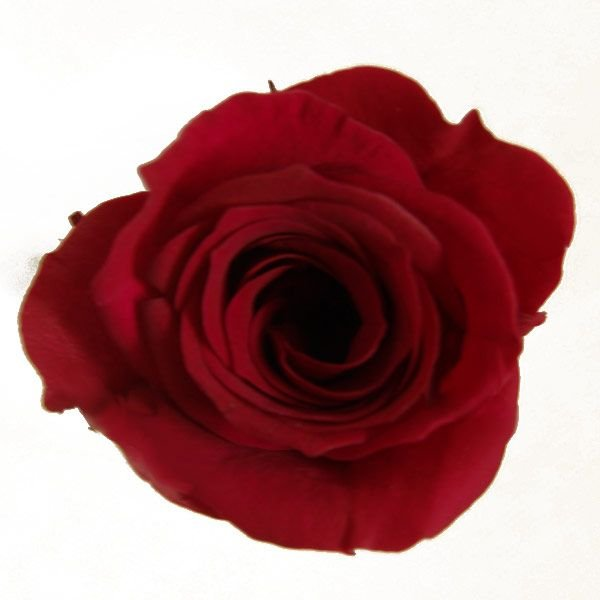 プリンセス 春の新作 ローズ 上品 バーガンディ 小分け 花材 材料 プリザーブドフラワー 1輪入