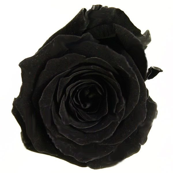 保障 プリンセス ローズ ブラック 小分け 新作からSALEアイテム等お得な商品 満載 1輪入 花材 材料 プリザーブドフラワー