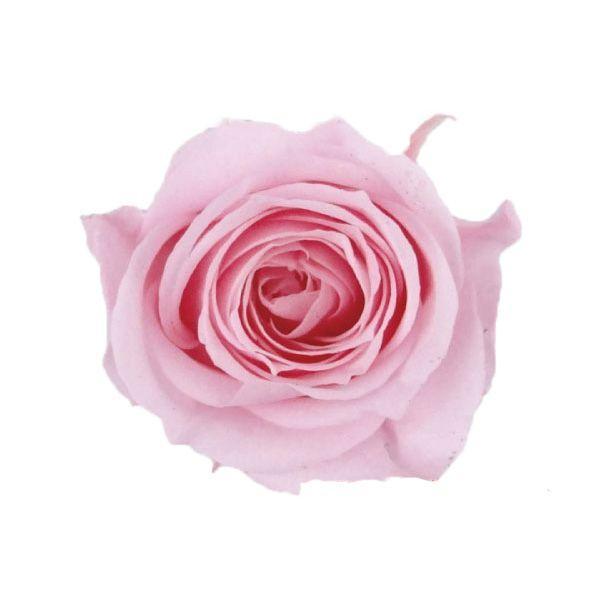 プリザーブドフラワー 返品交換不可 花材 アヴァ ローズ マドレーヌピンク バラ売り 小分け 1輪 永遠の定番