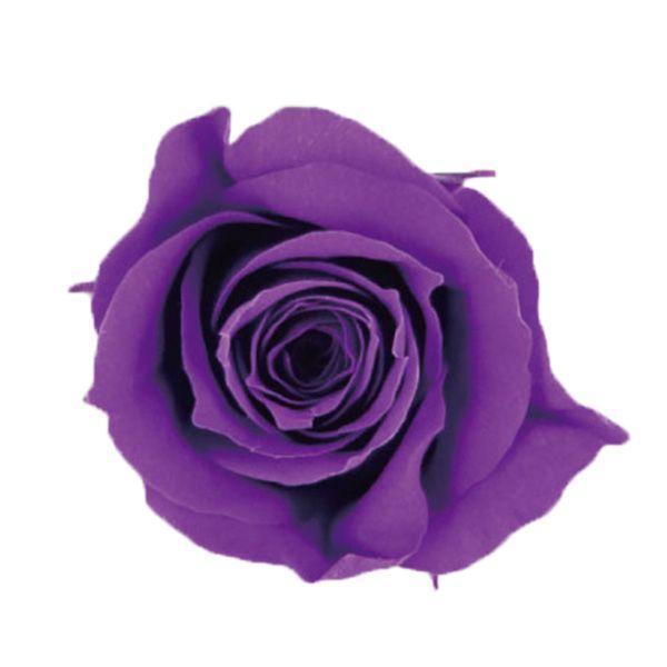 プリザーブドフラワー 花材 アヴァ メーカー在庫限り品 ローズ 1輪 小分け ヴァイオレット バラ売り 専門店