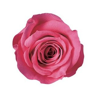 プリザーブドフラワー 信頼 日本 花材 アヴァ ローズ 小分け バラ売り ピンクフランボワーズ 1輪