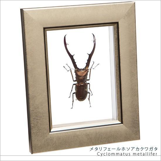大幅値下げランキング 昆虫標本 メタリフェールホソアカクワガタ 年間定番 メタリック調ライトフレーム