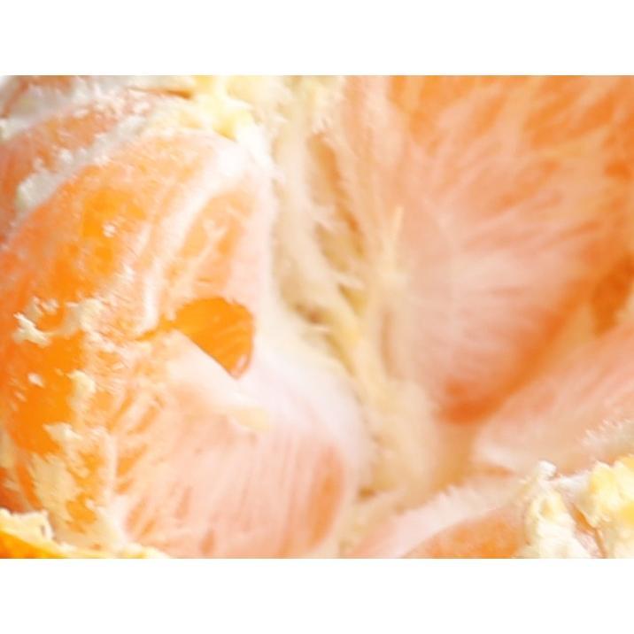 送料無料 長崎県産みかん 約5kg サイズ(S・M・L)混合|sotome|04