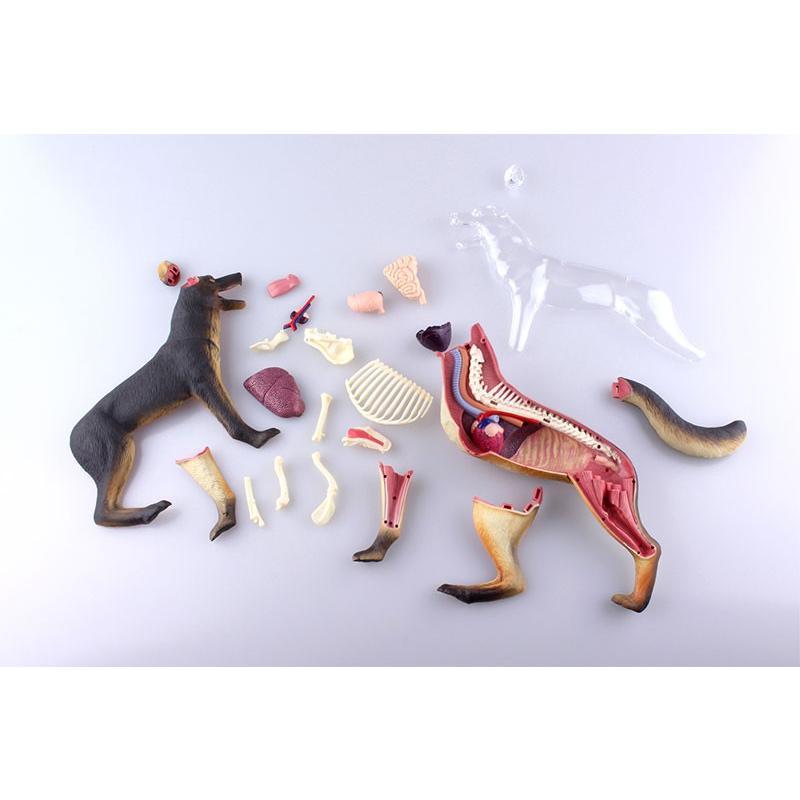 4D VISION 動物解剖モデル 犬解剖モデル star-gate 03
