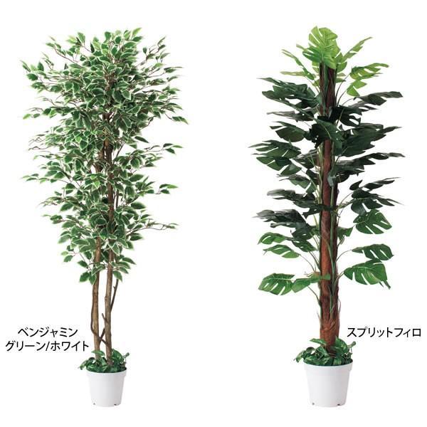 人工樹木 リアル 高さ180cm ベンジャミングリーン スプリットフィロ|storeplan|03