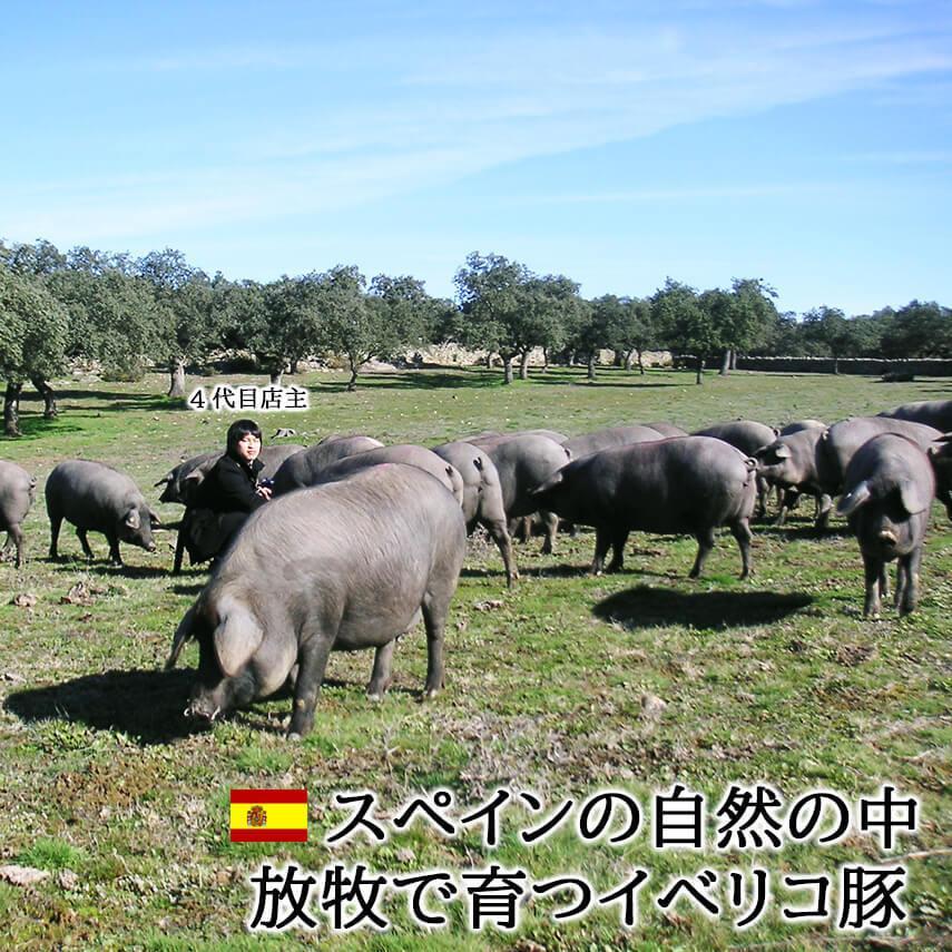 イベリコ豚 ロース しゃぶしゃぶ 400g 最高級ベジョータ 豚肉 黒豚お歳暮 高級 ギフト|suehiroya|07