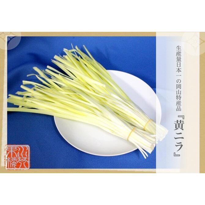 岡山県特産 超高級食材 黄ニラ 秀品 500g(50g×10束) にら 韮 suikinkarou 02
