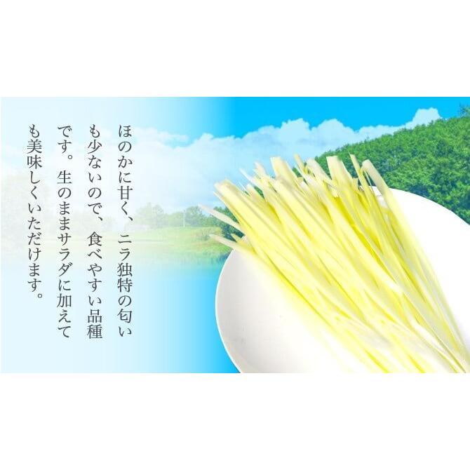 岡山県特産 超高級食材 黄ニラ 秀品 500g(50g×10束) にら 韮 suikinkarou 03