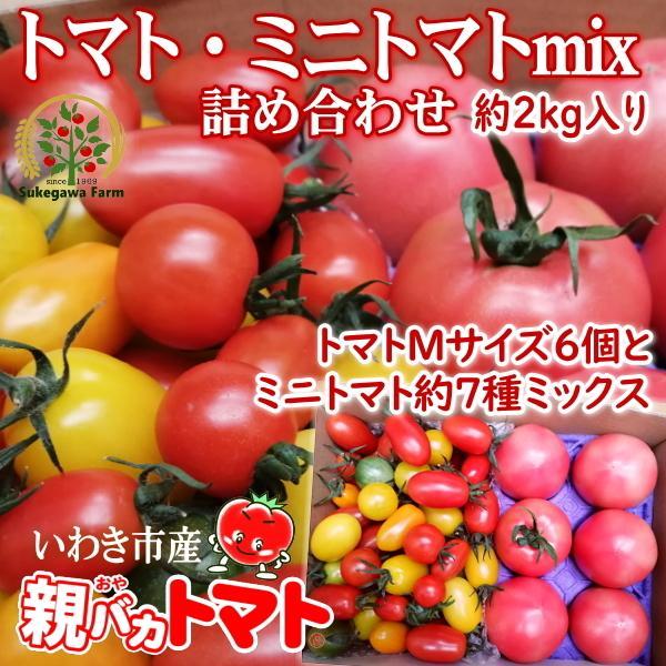 親バカトマト6個とミニトマト900gの詰め合わせ 約2kg いわき市産 選べるミニ|suketoma|15