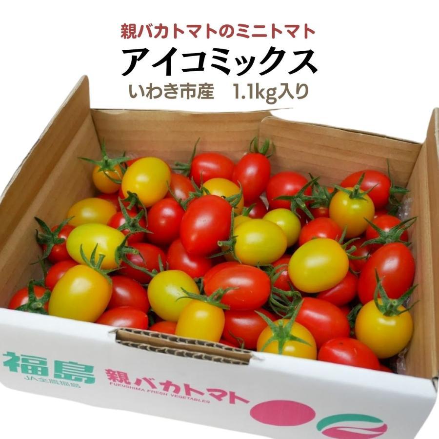 アイコミックス1.2kg入り 親バカトマトのミニトマト いわき市産  suketoma