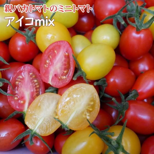 アイコミックス1.2kg入り 親バカトマトのミニトマト いわき市産  suketoma 02