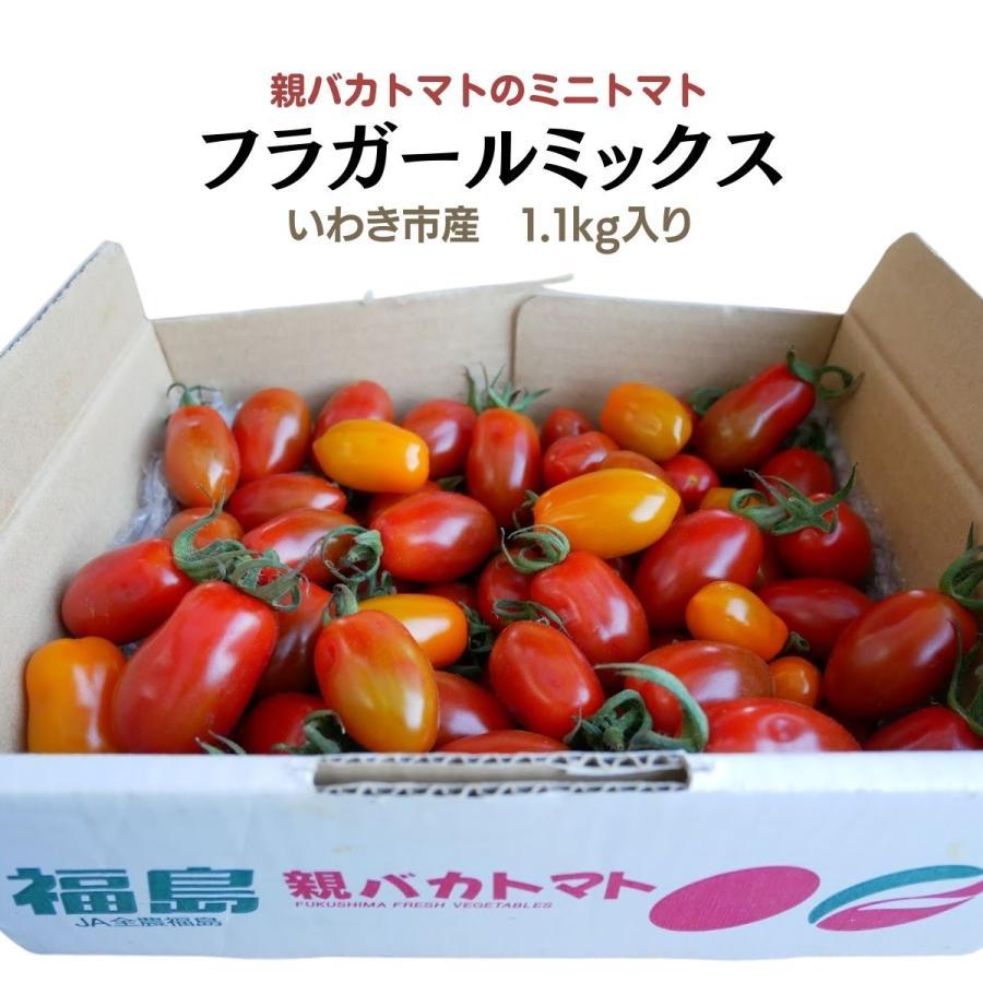 フラガールミックス1.2kg入り 親バカトマトのミニトマト いわき市産  suketoma