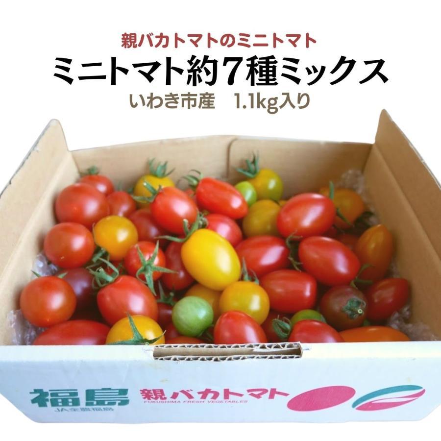 親バカトマトのミニトマト約7種ミックス 1.2kg いわき市産  suketoma