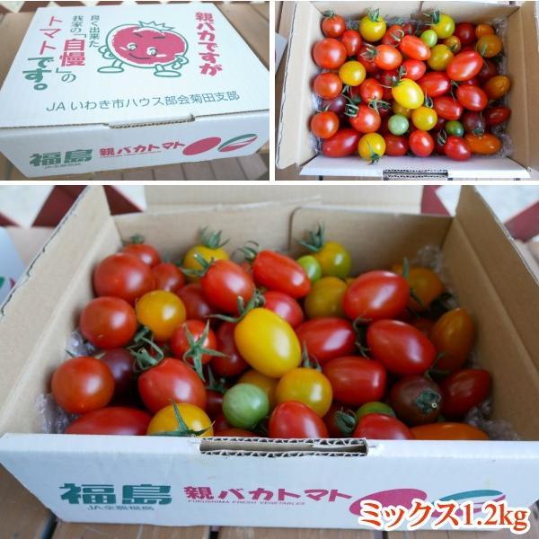 親バカトマトのミニトマト約7種ミックス 1.2kg いわき市産  suketoma 02