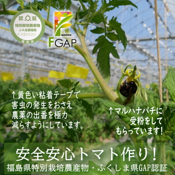 親バカトマトのミニトマト約7種ミックス 1.2kg いわき市産  suketoma 11