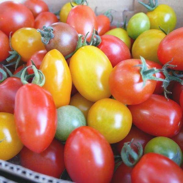 親バカトマトのミニトマト約7種ミックス 1.2kg いわき市産  suketoma 04