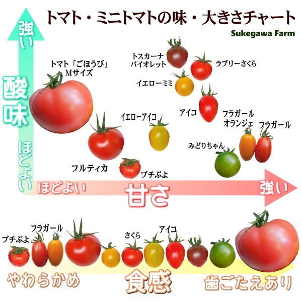 親バカトマトのミニトマト約7種ミックス 1.2kg いわき市産  suketoma 05