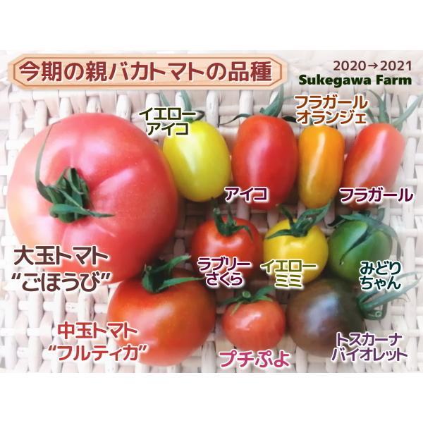 親バカトマトのミニトマト約7種ミックス 1.2kg いわき市産  suketoma 06