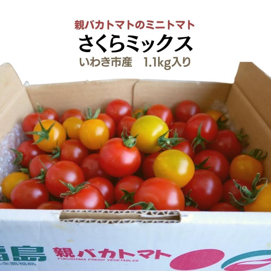 さくらミックス1.2kg入り 親バカトマトのミニトマト いわき市産 |suketoma