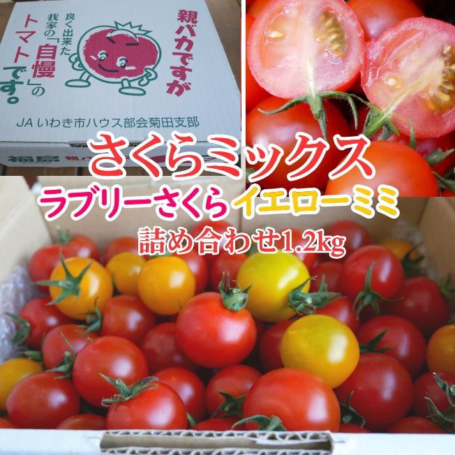 さくらミックス1.2kg入り 親バカトマトのミニトマト いわき市産 |suketoma|02