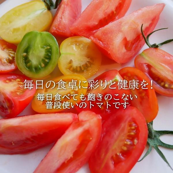 親バカトマトとミニトマトの詰め合わせ 約4kg いわき市産 選べるミニ suketoma 03