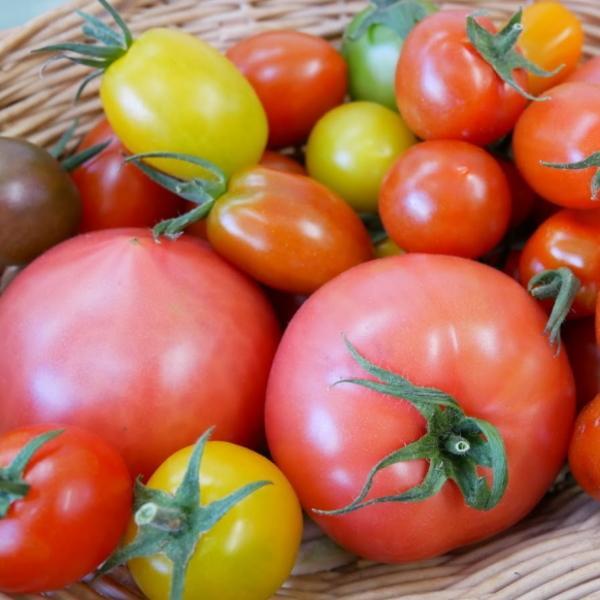 親バカトマトとミニトマトの詰め合わせ 約4kg いわき市産 選べるミニ suketoma 05