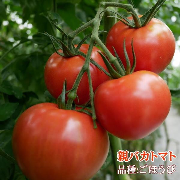 親バカトマトとミニトマトの詰め合わせ 約4kg いわき市産 選べるミニ suketoma 06
