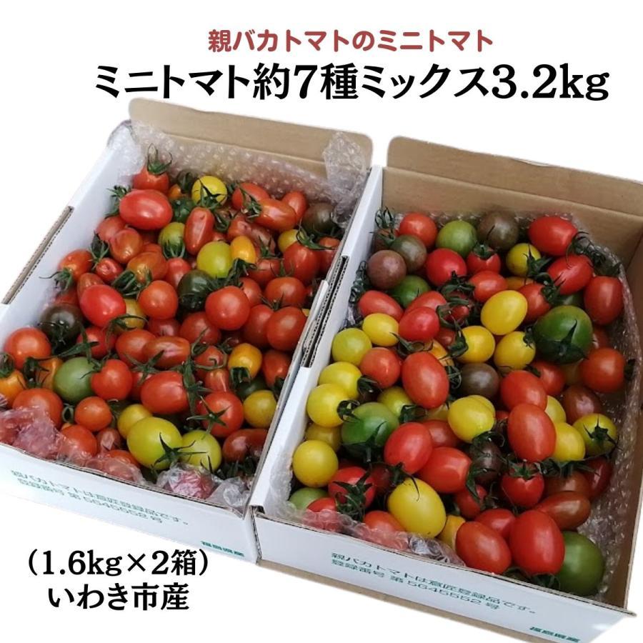 親バカトマトのミニトマト約7種ミックス 3.6kg いわき市産 |suketoma