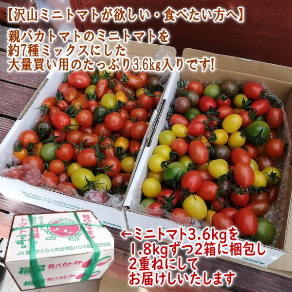 親バカトマトのミニトマト約7種ミックス 3.6kg いわき市産 |suketoma|02