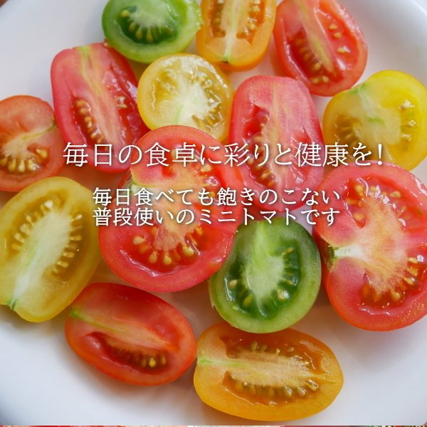 親バカトマトのミニトマト約7種ミックス 3.6kg いわき市産 |suketoma|03