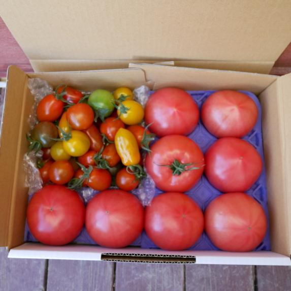 【新商品】親バカトマト8個とミニトマト500gの詰め合わせ 約2kg いわき市産 選べるミニ suketoma 02