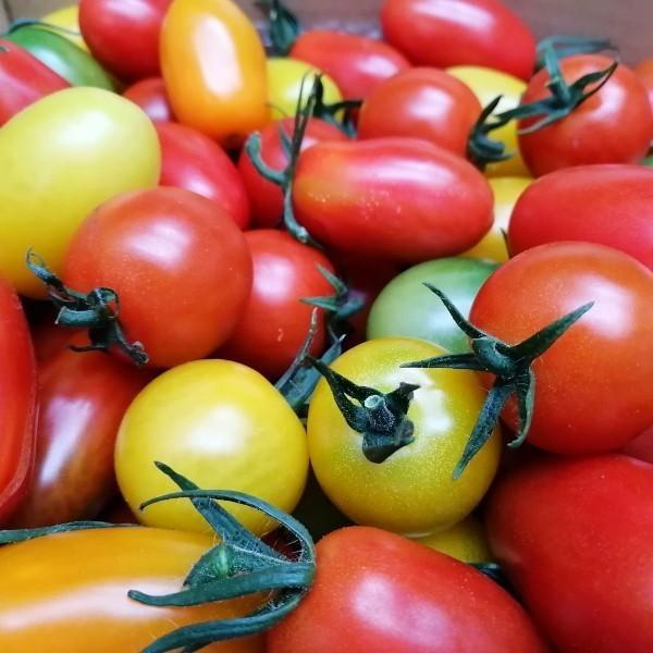 【新商品】親バカトマト8個とミニトマト500gの詰め合わせ 約2kg いわき市産 選べるミニ suketoma 04