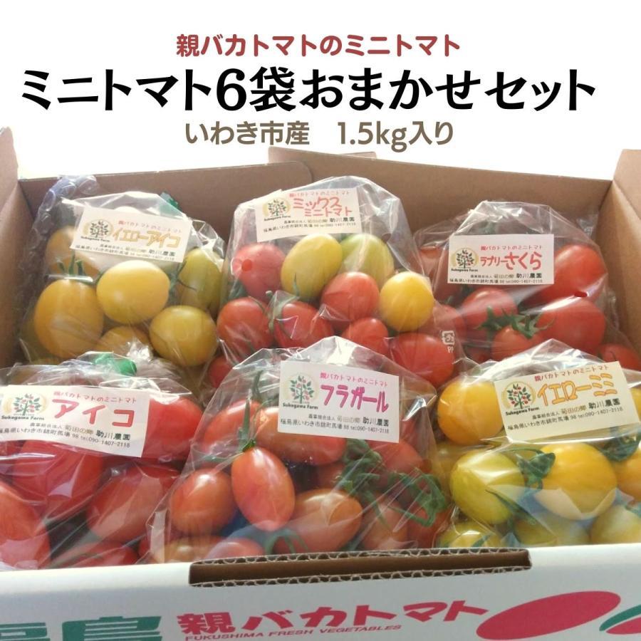 親バカトマトのミニトマト250g×6袋詰 おまかせセット 1.5kg入り  いわき市産|suketoma