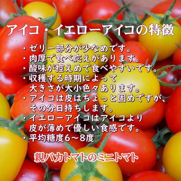アイコミックス1.8kg入り 親バカトマトのミニトマト いわき市産  suketoma 03