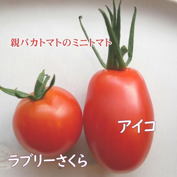 アイコとさくら1.8kg入り 親バカトマトのミニトマト いわき市産  suketoma 02