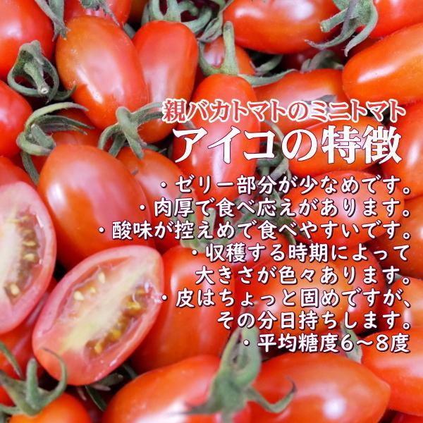 アイコとさくら1.8kg入り 親バカトマトのミニトマト いわき市産  suketoma 03