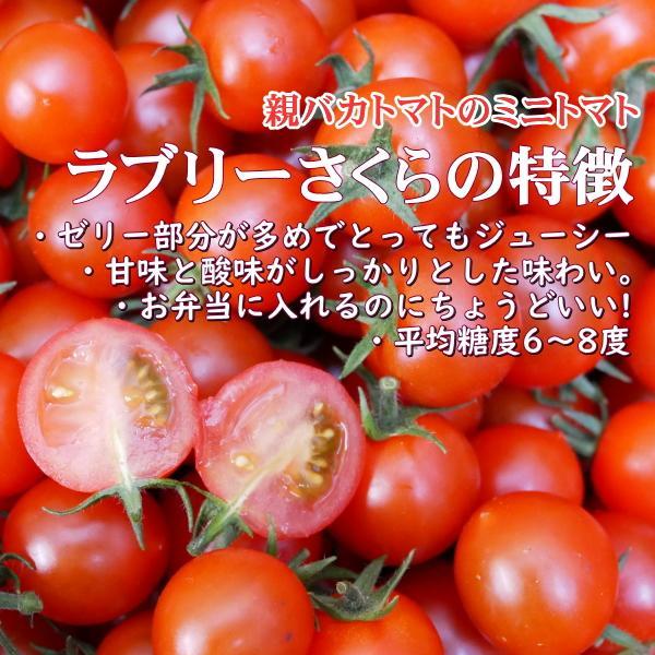 アイコとさくら1.8kg入り 親バカトマトのミニトマト いわき市産  suketoma 05