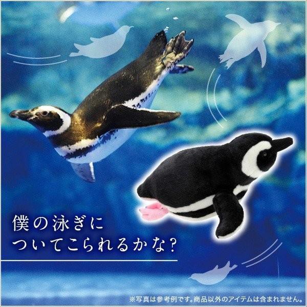 すみだ水族館 オリジナル 飼育員監修 スイミング マゼランペンギン ぬいぐるみ Mサイズ|sumida-aquarium|02