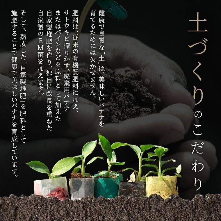 バナナ 甘熟王ゴールドプレミアム 9~10パック スミフル 最高級 sumifru 15