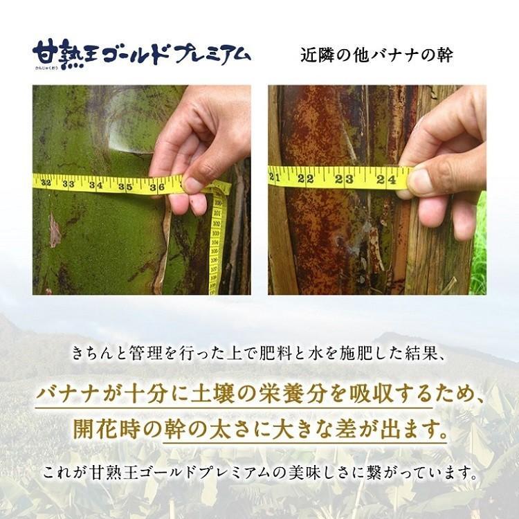 バナナ 甘熟王ゴールドプレミアム 9~10パック スミフル 最高級 sumifru 08