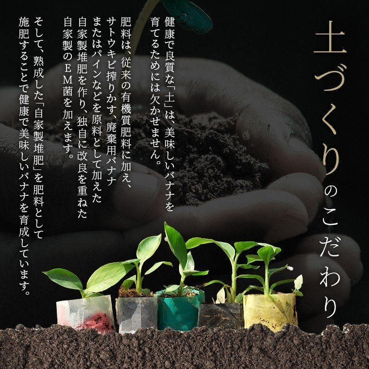 スミフル開発品種 バナナ キウイーナ 3パック 数量限定販売|sumifru|10